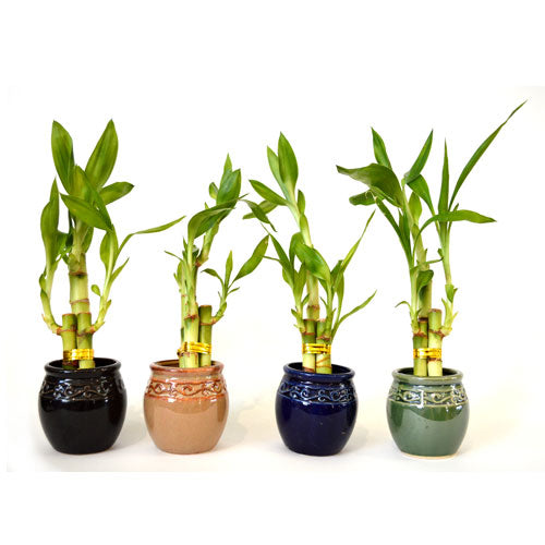 Live 3 Style Party Set of 4 Bamboo Plant Arrangement w/ Ceramic Vase - 9GreenBox