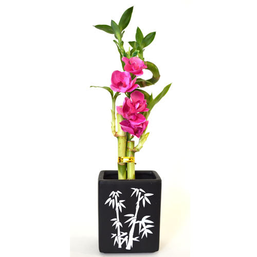 9GreenBox - Lucky Bamboo Spiral Style with Silk Flowers and Large Black Ceramic Vase - 9GreenBox
