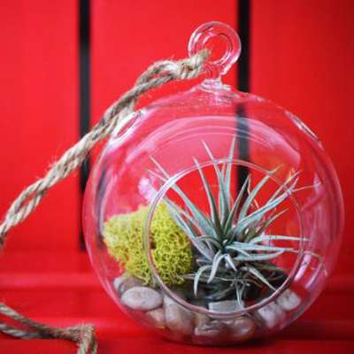 Air Plant - Terrarium Kit with Moss and Pebbles - 9GreenBox