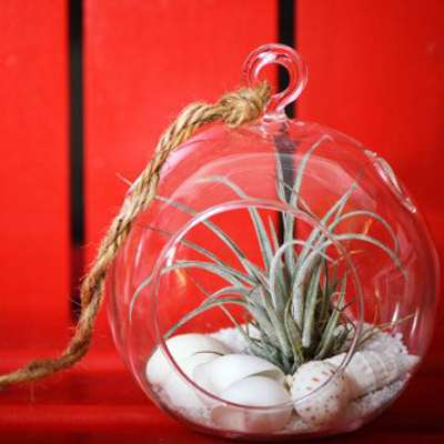 Air Plant - Terrarium Kit with White Sand and Sea Shells