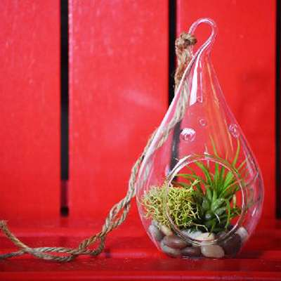 Air Plant - Tear Drop Terrarium Kit with Moss and Pebbles - 9GreenBox