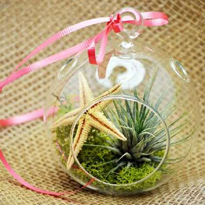 Air Plant - Terrarium Kit, Moss and Starfish with Red Ribbon - 9GreenBox