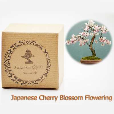 9greenbox Bonsai Seed Kit Complete Starter Set For Growing Dwarf Trees Seeds Ceramic Vase Potting Mix Small Rocks Instructional Guide Hand Crafted Gift Ready Box Japanese Cherry Blossom 9greenbox