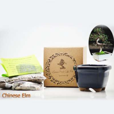 Chinese Elm Bonsai Seed Kit- Gift - Complete Kit to Grow - 9GreenBox