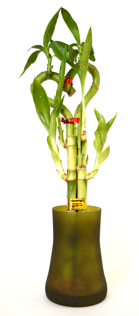 9GreenBox - Lucky Bamboo Heart Style with Tall Glass Vase