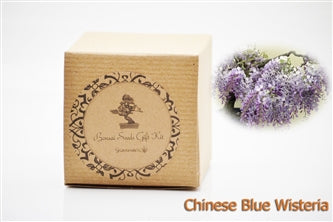 Blue Wisteria Bonsai Seed Kit Gift Complete Kit To Grow 9greenbox
