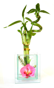 9GreenBox - Live 3 Style Lucky Bamboo Plant Arrangement with Glass Orchid Vase