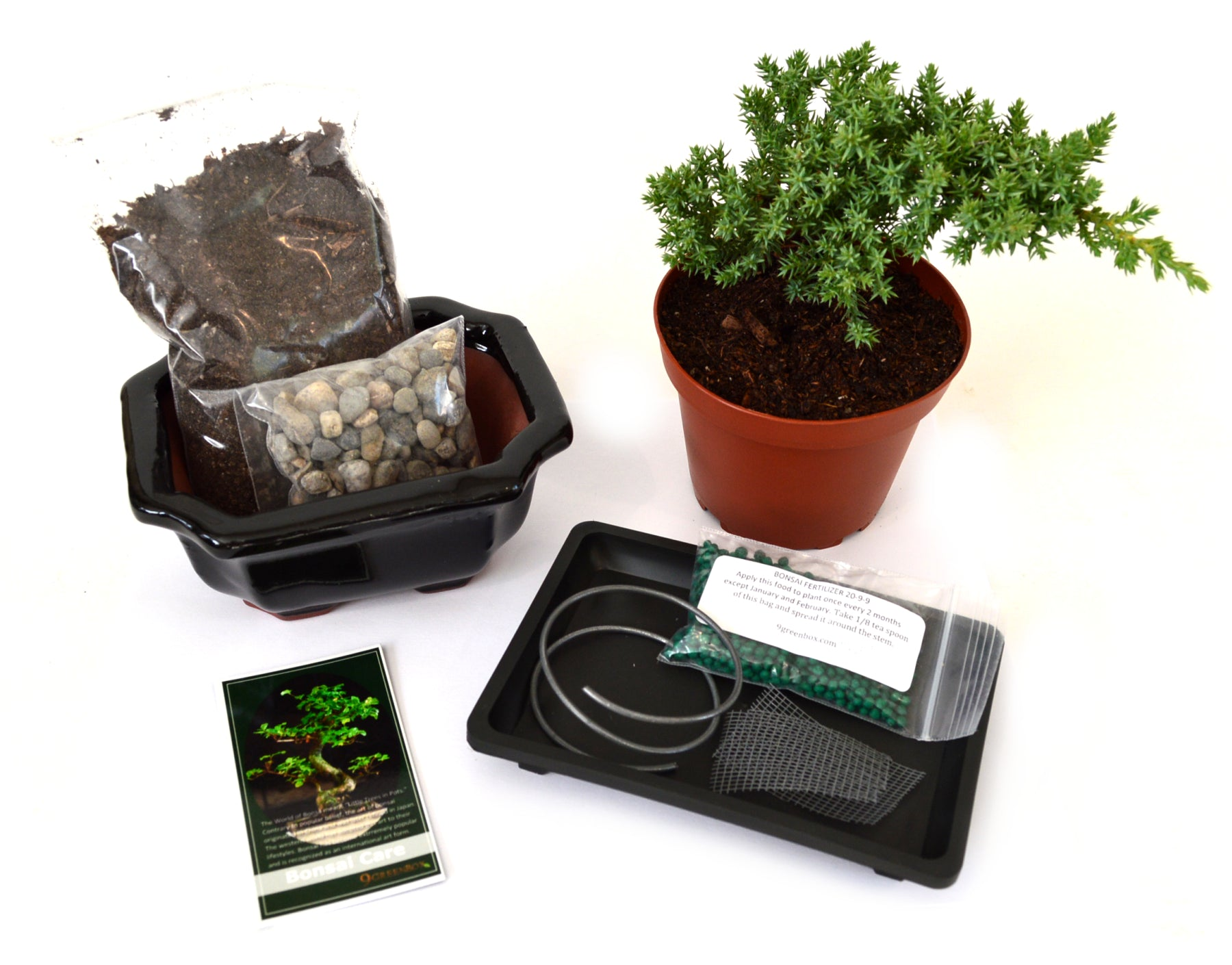 9greenbox Complete Juniper Bonsai Tree Starter Kit With Ceramic Wiring Vase And Water Tray