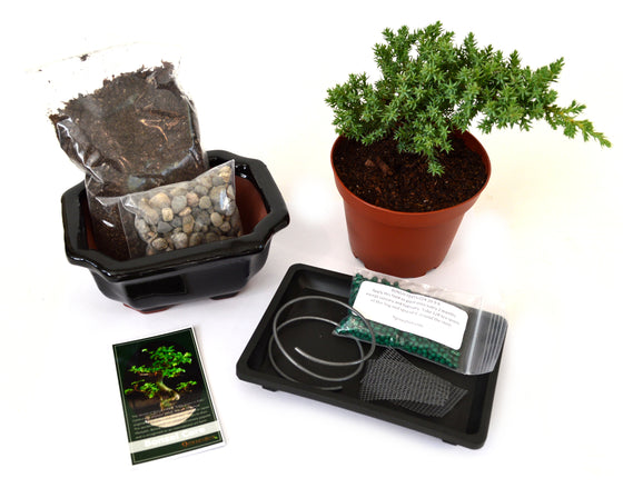 9Greenbox - Complete Juniper Bonsai Tree Starter Kit with Ceramic Vase and Water Tray - 9GreenBox