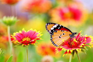 How to Create a Butterfly Garden