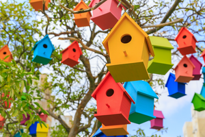 How to Attract Birds with Painted Birdhouses and Other Features
