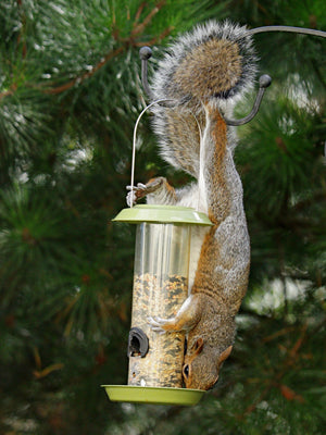 How to Keep Squirrels Out of Bird Feeder: 13 Proven Tips & Tricks