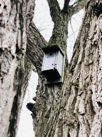 A bird house affixed to a tree.