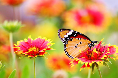 Happy Gardens - Butterfly Garden