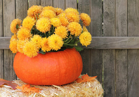 Happy Gardens - Pumpkin Planters
