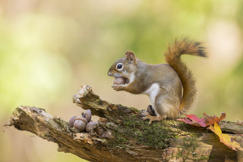 A squirrel on a tree branch.