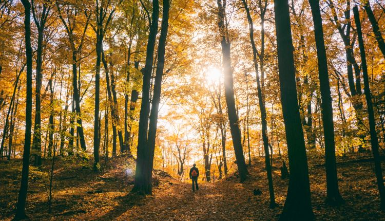 5 Reasons To Go Hiking This Fall