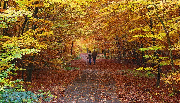 How To Plan The Perfect Fall Hike?