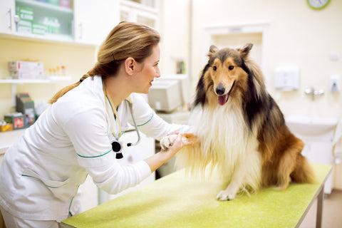 The Importance of Hand Hygiene in Animal Facilities