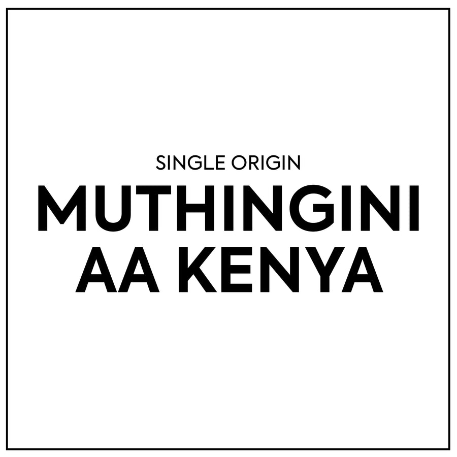 Single Origin - Kenya Muthingini AA