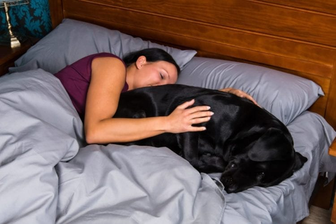 Women Sleep Better With Dogs
