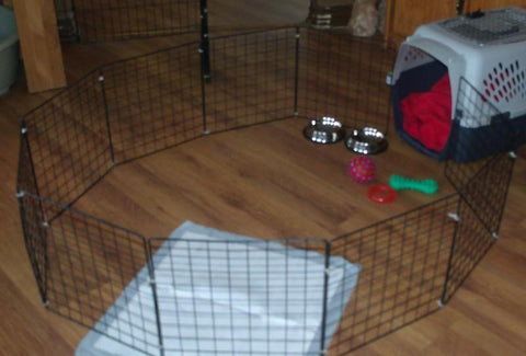 An example of a good crate set up. Notice the pad, the food and water bowl, and the toy.