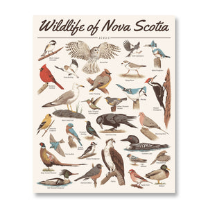 Wildlife of Nova Scotia: Birds Print