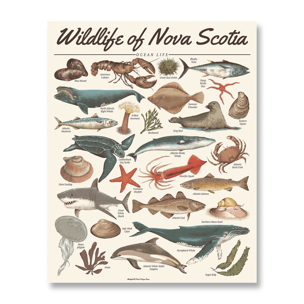 Wildlife of Nova Scotia: Ocean Life Print