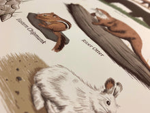 Wildlife of Nova Scotia: Mammals Print