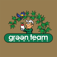 Green Team Genetics | SOL Seeds | Cannabis Seeds | Cannabis Seed Bank