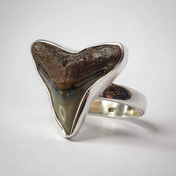 Shark Tooth Ring Size 7 (SSR251)