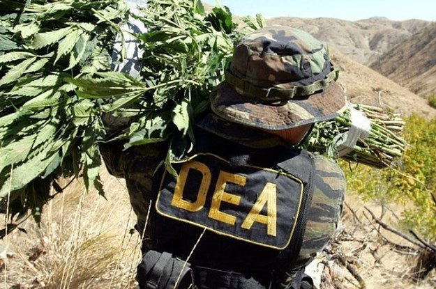 DEA Delays Reclassifying Cannabis
