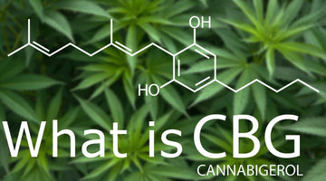 What CBG is and how is it similar to CBD