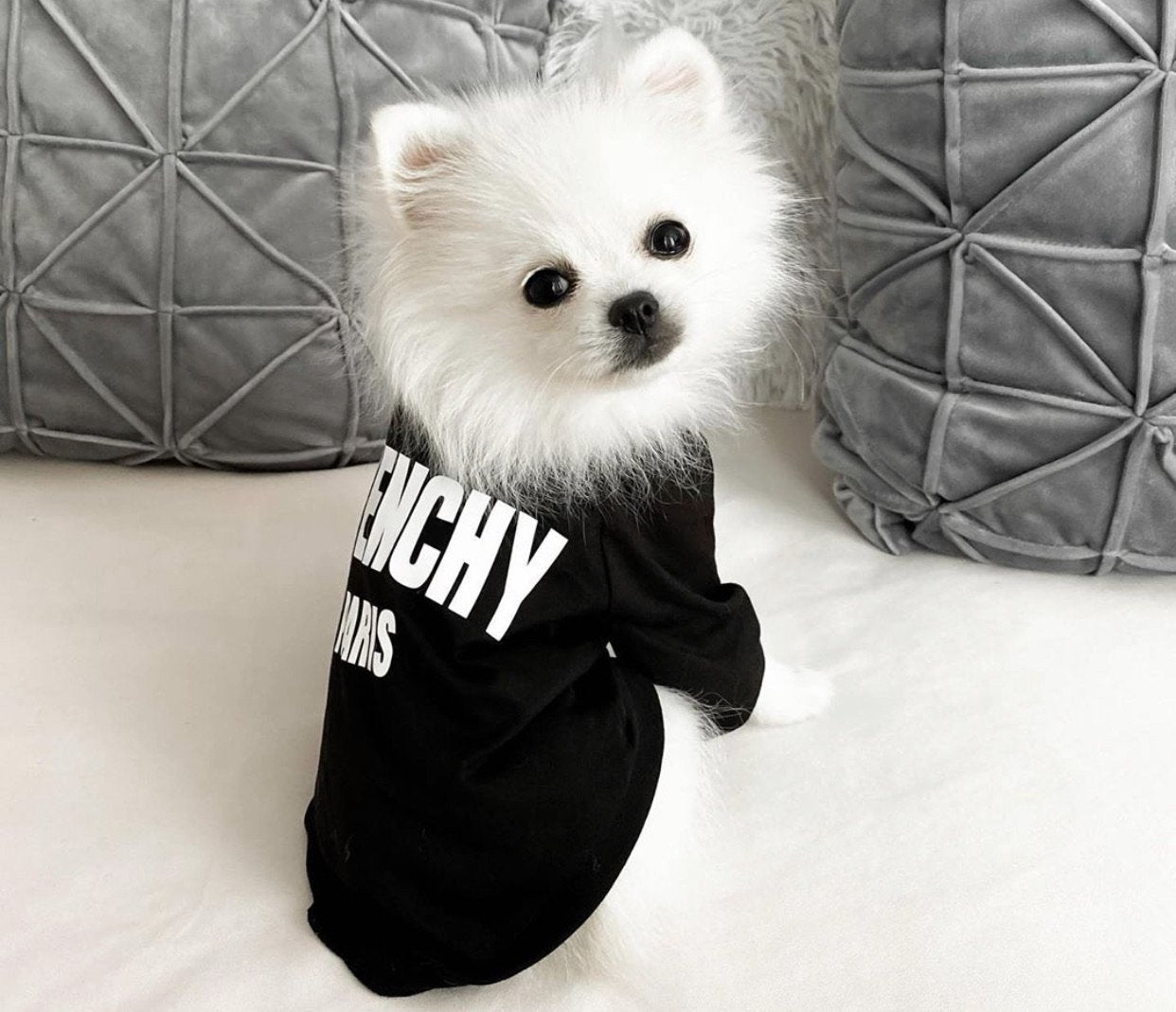 Pawvenchy - Furbaby Couture