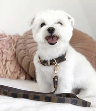 Pawtton Collar & Leash - Furbaby Couture