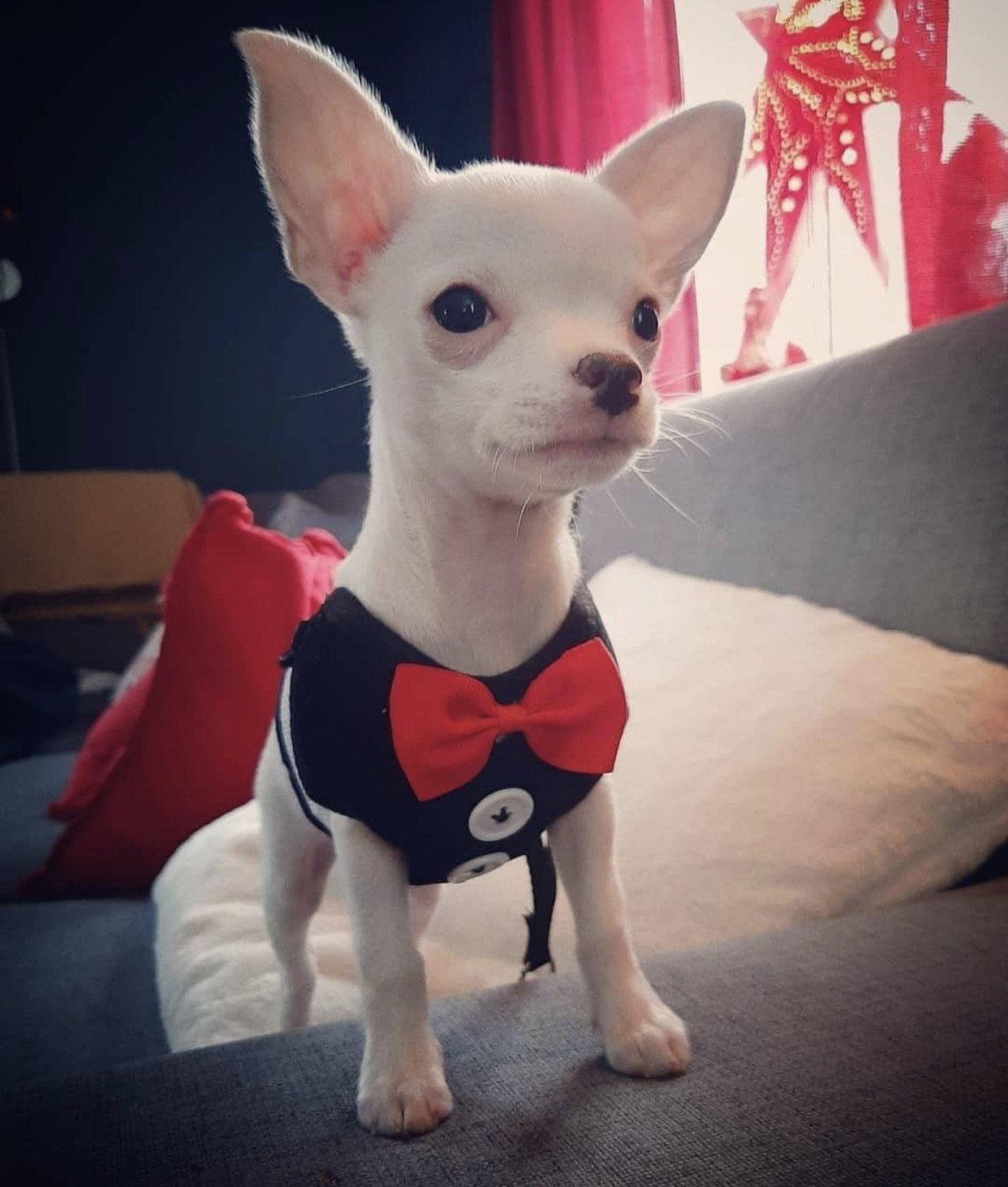 Mr. Woof - Furbaby Couture
