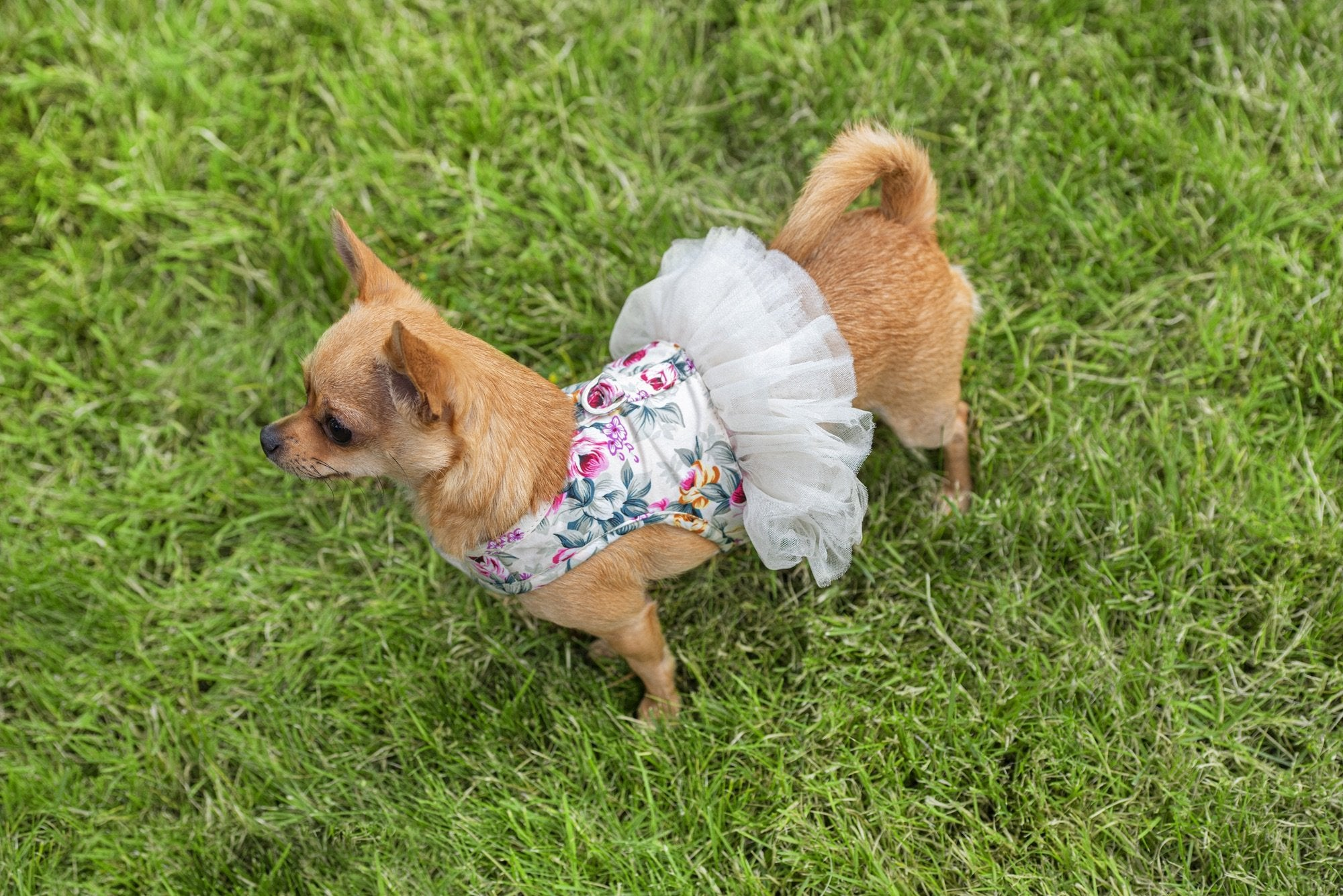 Dolce Harness & Leash - Furbaby Couture