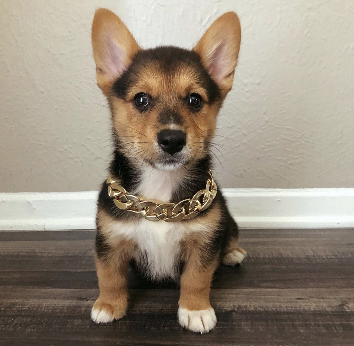 Otis Chain - Furbaby Couture