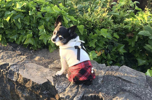 School Girl - Furbaby Couture