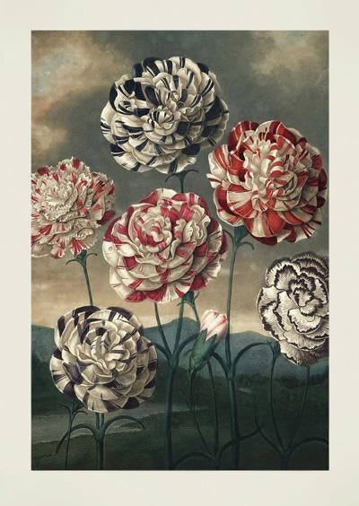 A Group Of Carnations Dark World Art Print