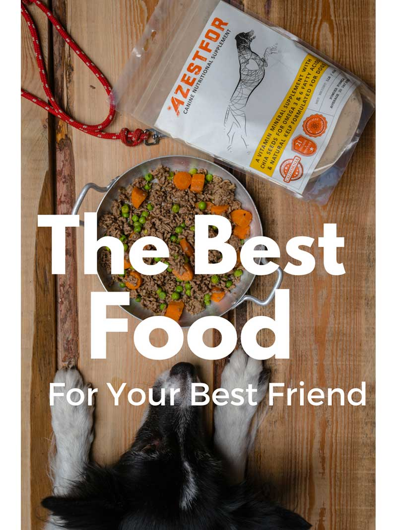 DIY dog food the best food for your dog