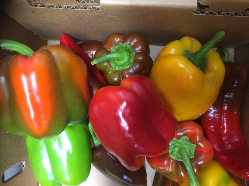 "Peppers, ""Rainbow"" Mix- organic"
