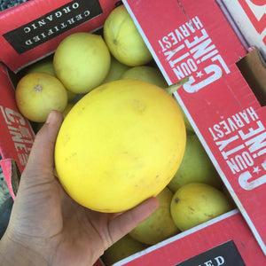 Melons-mini honey blonde/ canary (small)- organic