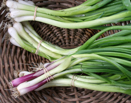 Green Garlic- organic