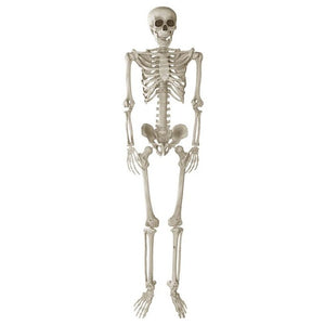 Your New Neighbor (5.5FT Jointed Skeleton)