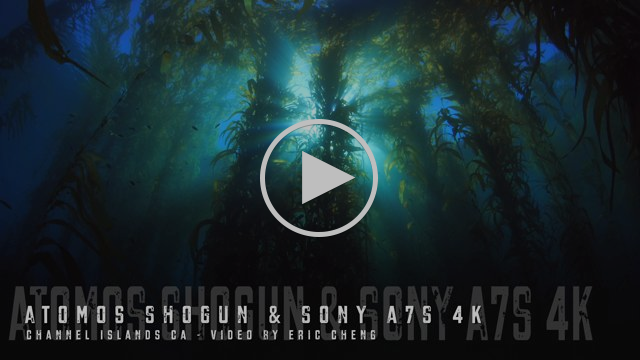 Nauticam and Atomos Shogun Vimeo Showreel (Download 4K File Here)