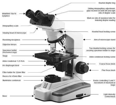 Diagram of a microscope midwest microscope boneyard diagram of a microscope ccuart Choice Image