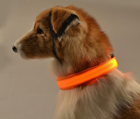 Illuminated LED Pet Collar for Night Safety