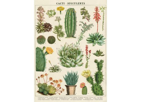 Vintage Style Poster Cacti Succulents