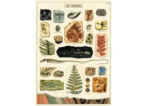 Vintage Style Poster Fossils